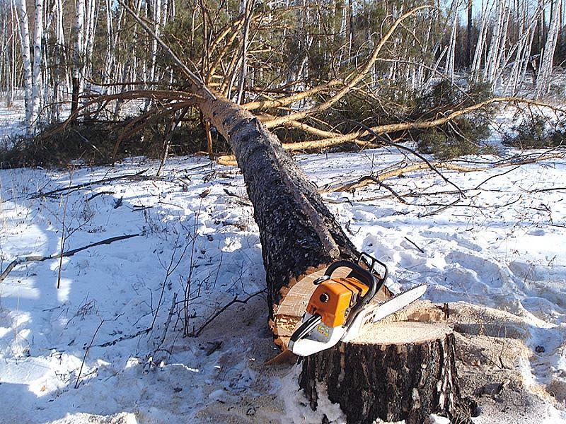 Фото: ostrovskoe.smi44.ru