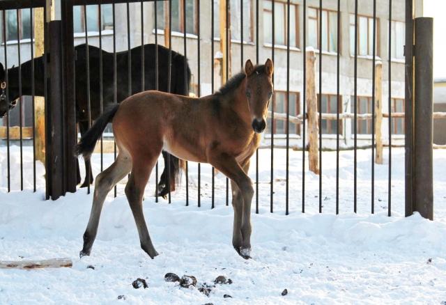 Фото: sport-horse.pro