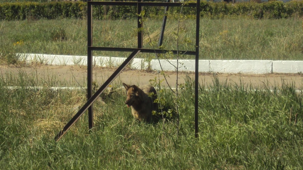 Единственные, кто радуется разрастающейся свалке, — бродячие псы. Фото: © «ДЕНЬ.org»