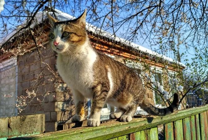 Фото: izmailvechernii.com.ua