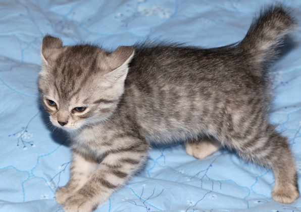 Фото: cats.leit.ru