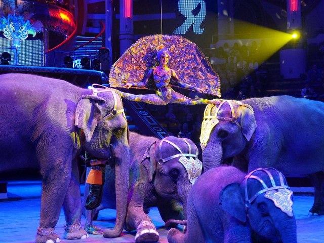 Фото: circus-kislovodsk.ru