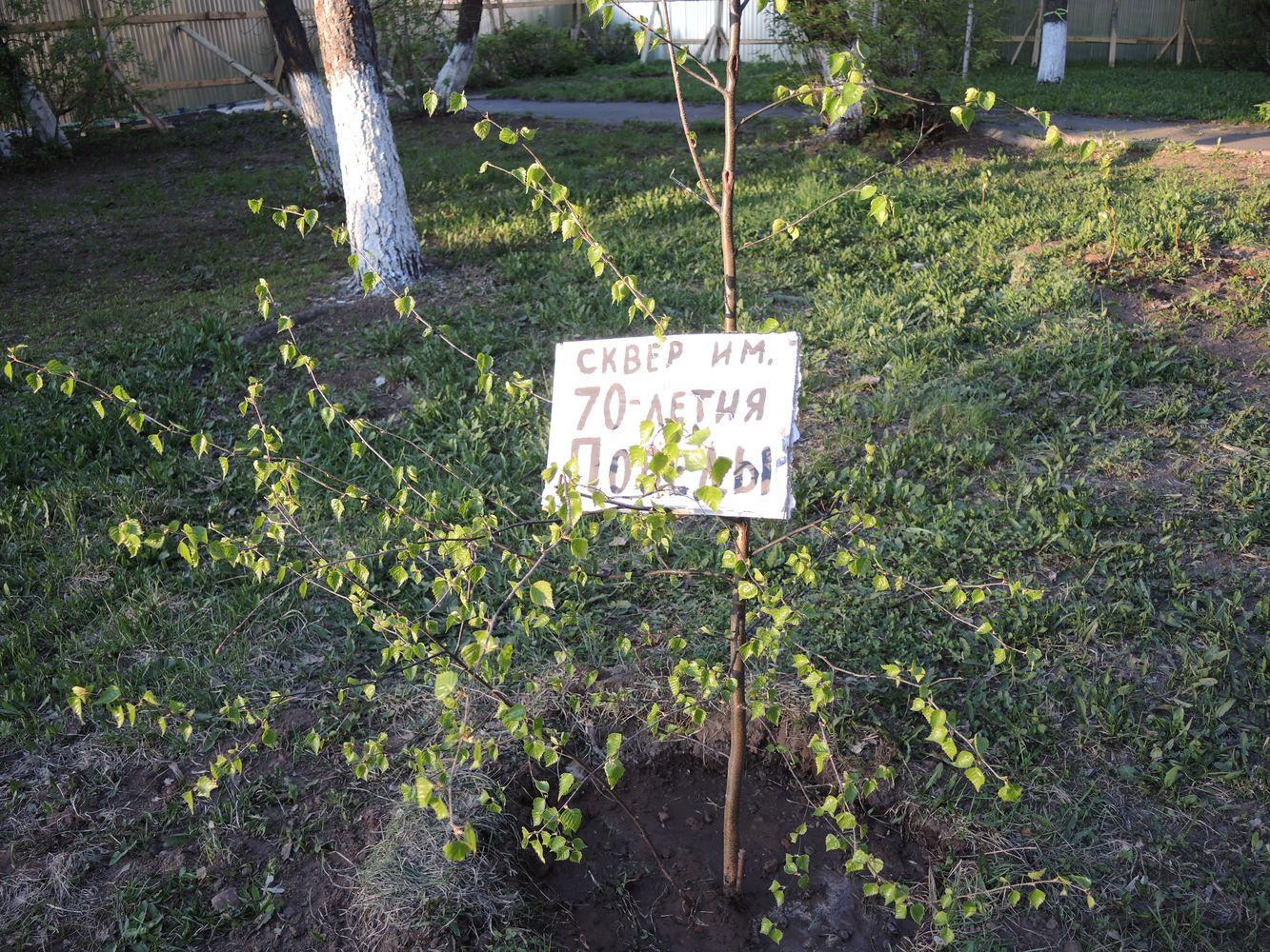 Жильцы домов надеются, что это может остановить вырубку деревьев и строительство магазина. Фото ©День.org