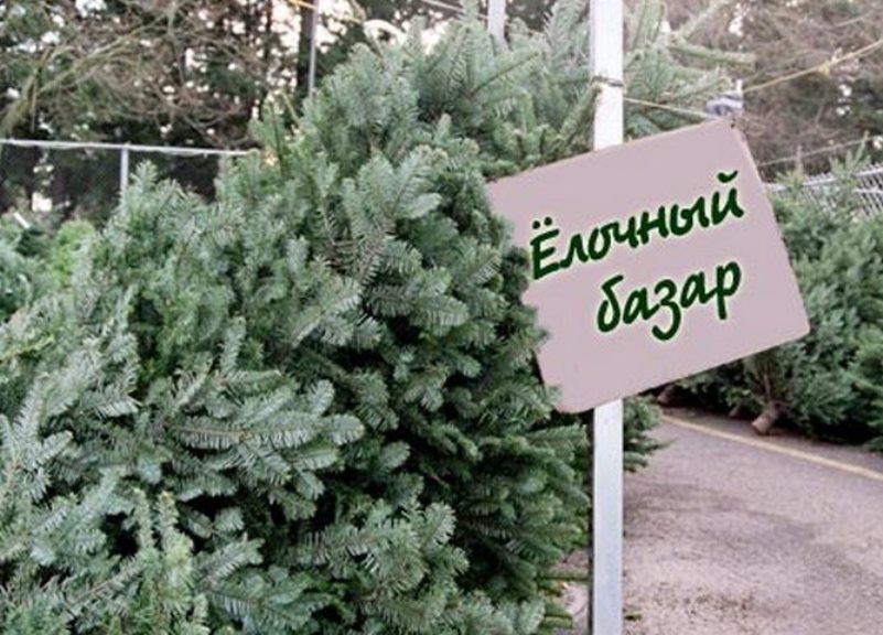 Фото: cod34.ru