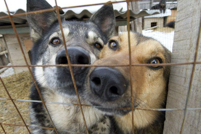 Кот и пес приют животных