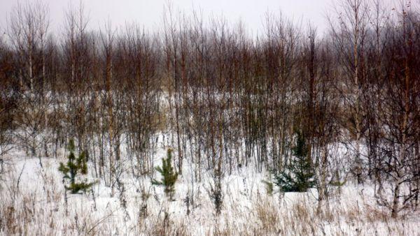 64 тысячи гектар неиспользуемых земель Удмуртии введут воборот до 2021-ого года