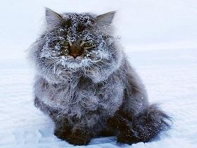 Фото: www.nsktv.ru