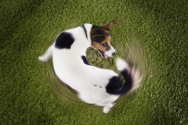 Выполнить трехлетний прогноз для нашего правительства — это то же самое, как собаке поймать свой хвост. Фото: divan-s.ru