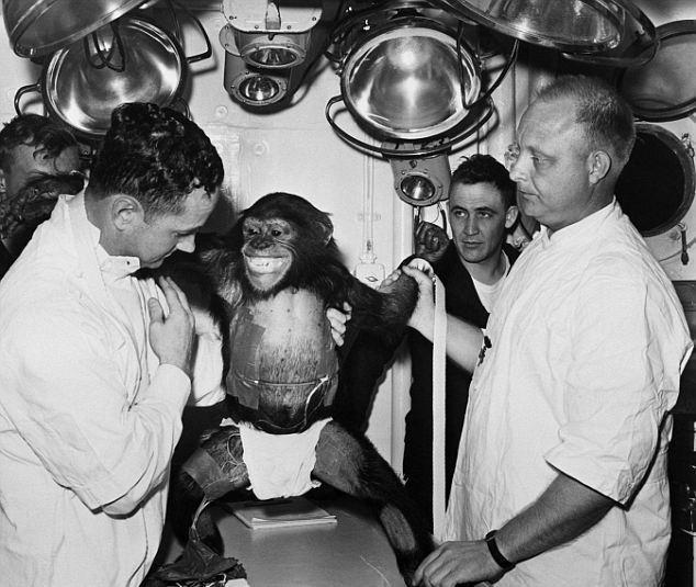 Шимпанзе-астронавт Энос. Фото newsmake.net