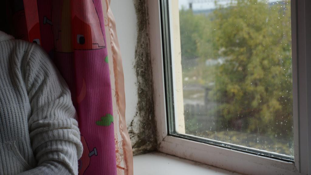 Плесень на окнах. Фото: © «ДЕНЬ.org»