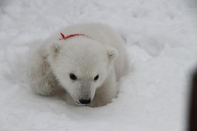 Фото: пресс-служба Зоопарка Удмуртии