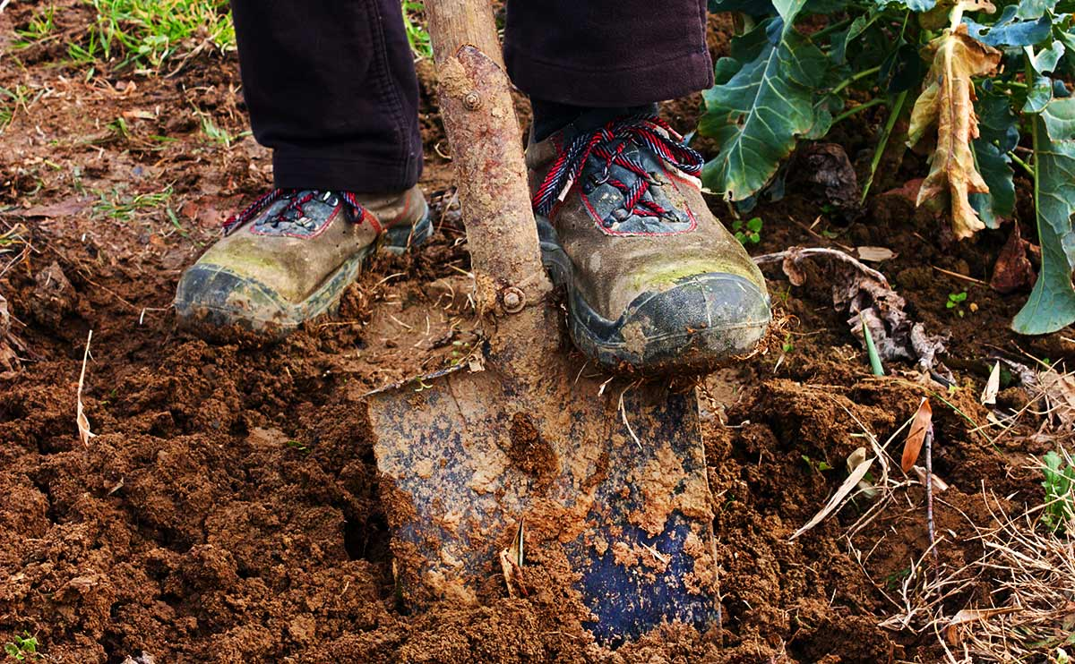 Фото: modernfarmer.com
