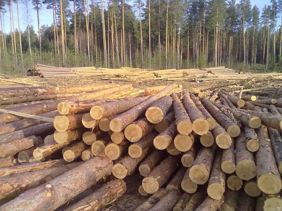 Фото: st5.stpulscen.ru