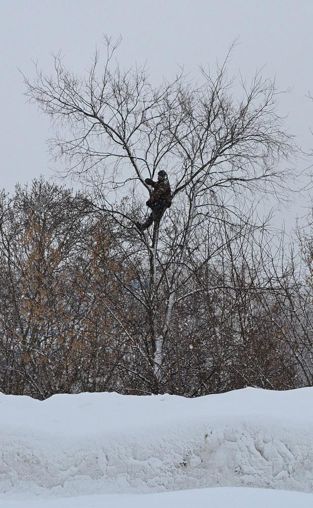 Как в былые советские годы, болельщики на ижевском ипподроме снова лезут на деревья, чтобы посмотреть гоночное зрелище. Фото: Александр Поскребышев
