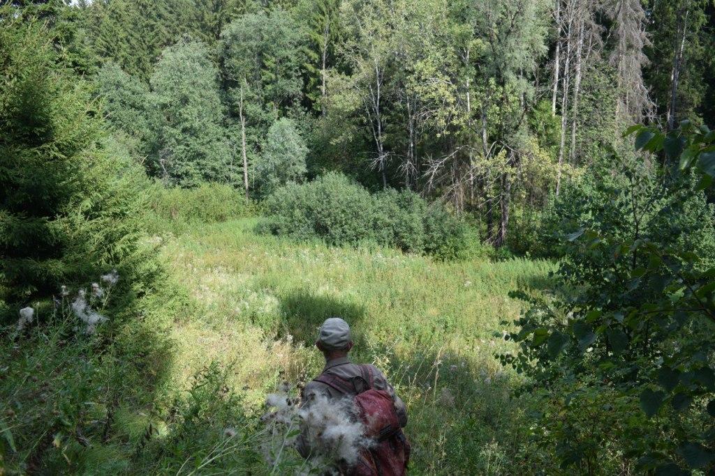 Территория Ярушкинского денропарка. Фото: vk.com (Ярушкиснкий дендропарк)