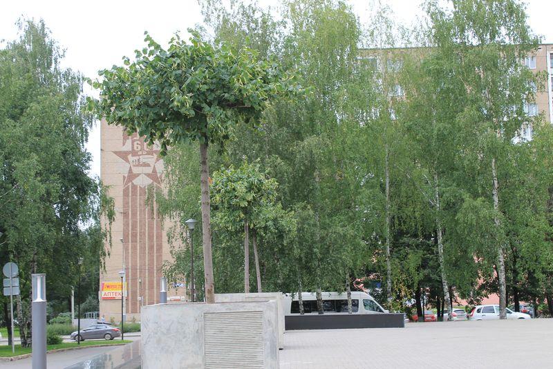 Липы у здания администрации. Фото ©День.org
