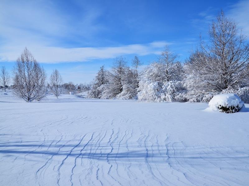 Фото: www.thebrentonarboretum.org