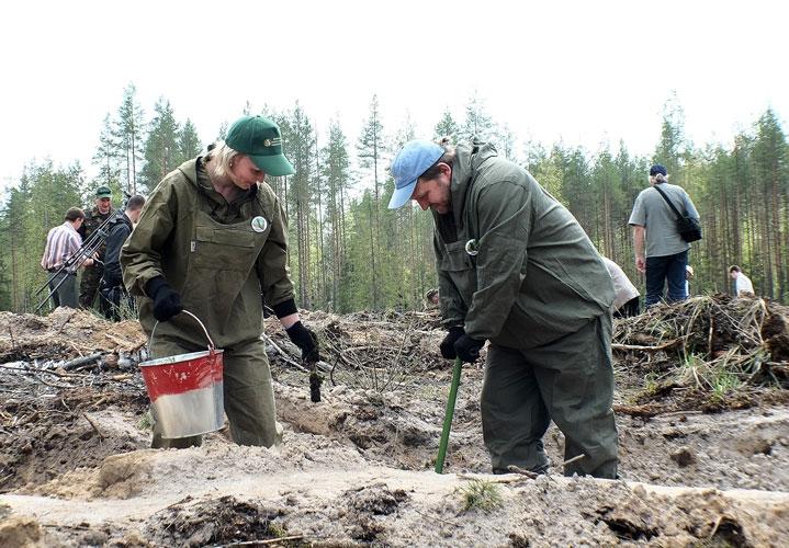 Никита Белых занимается лесовосстановлением. Фото: vyatka.ru