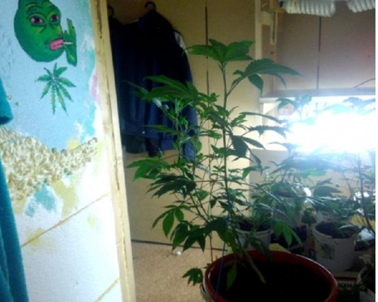 Гражданин Удмуртии выращивал коноплю усебя дома ФОТО