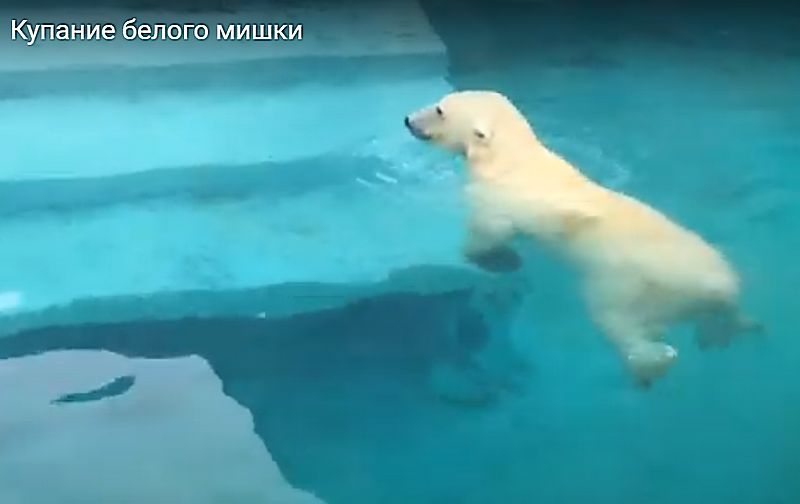 Кадр из видео на YouTube канале «Зоопарк Удмуртии»