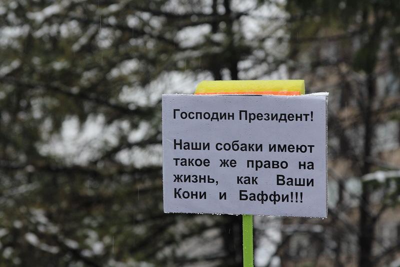 На одном из пикетов в Москве. Фото: nnm.me