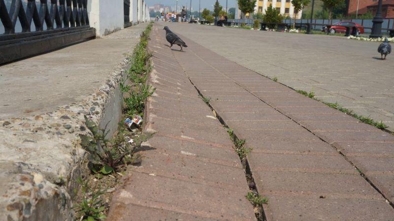 На набережной Ижевского пруда. Июль 2016 года. Фото: «ДЕНЬ.org»