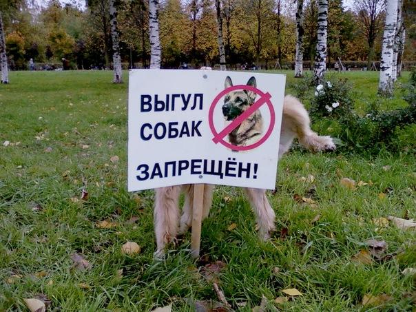 Фото: crimeavector.com.ua