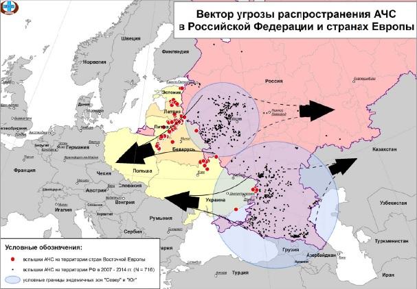 Прогноз по африканской чуме свиней в Российской Федерации. Фото: fsvps.ru