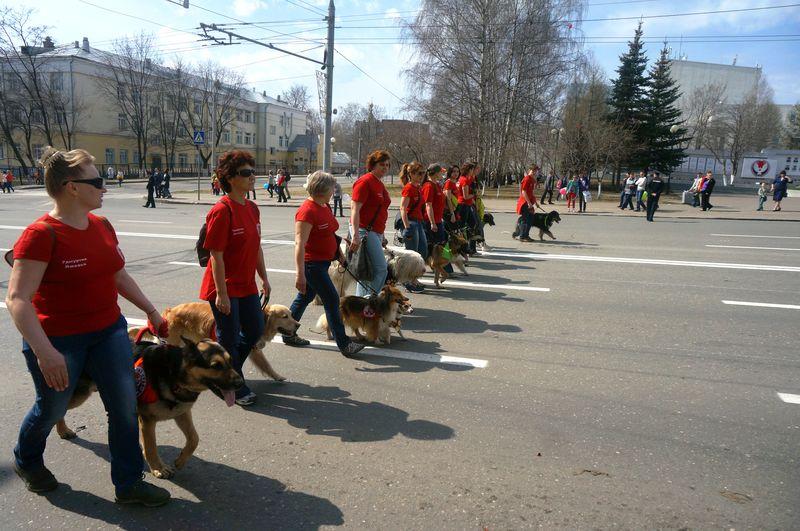 Собаки, солидарные со своими хозяевами