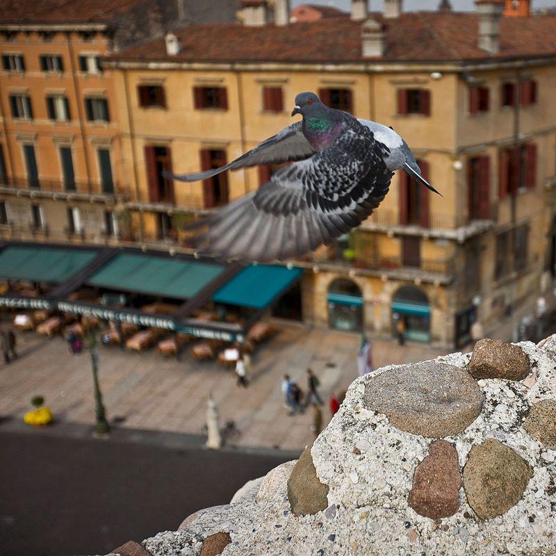 Город глазами птиц. Фото Алексея Вычугжанина.
