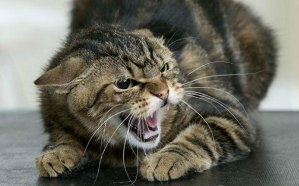 ВВоткинске отыскали тело кошки, которая болела бешенством