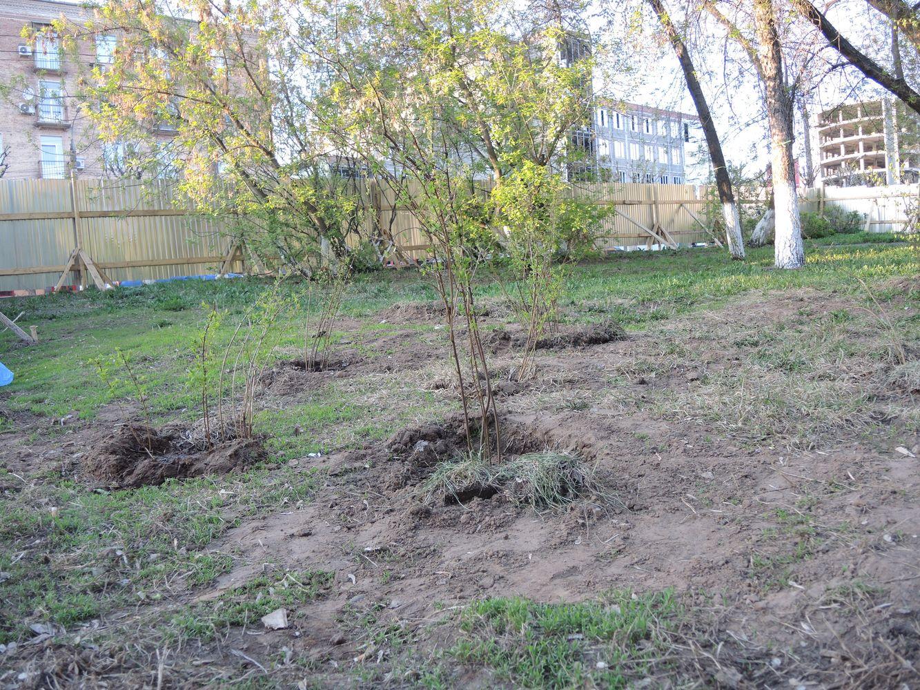 Надеясь предотвратить уничтожение сквера, жители посадили здесь деревья. Фото из архива ©«ДЕНЬ.org»