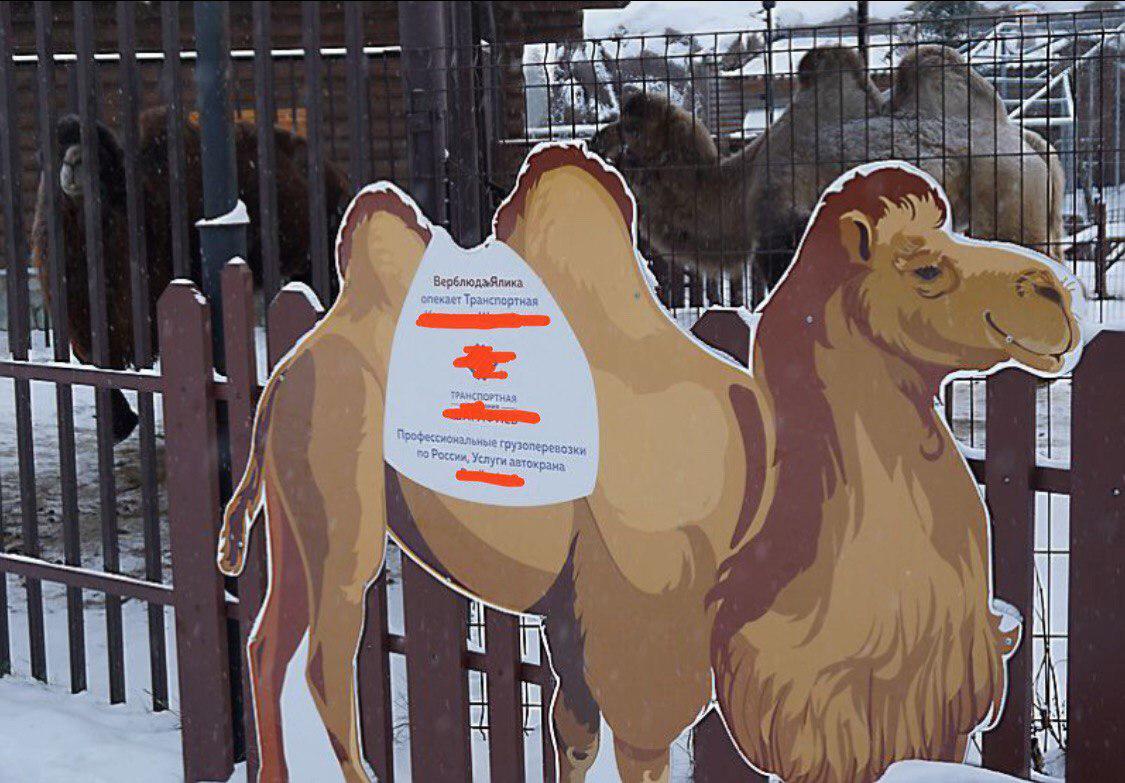 У некоторых животных есть свои спонсоры, но между ними всё равно стоит директор зоопарка. Фото: © тг-канал «Это Щукин