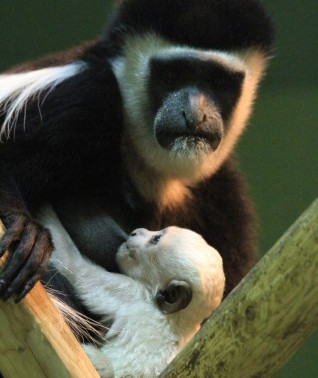 Фото: udm-zoo.ru