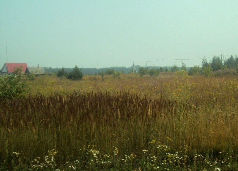 Здесь хотят построить школу-сад, Медведево. Фото: «ДЕНЬ.org»