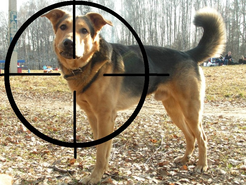 Каждый собаковод знает страшное слово «догхантер». От этих ненавистников бродячих животных в Ижевске довольно часто страдают и вполне мирные домашние любимцы... Читать далее...